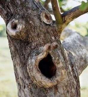 albero-faccia
