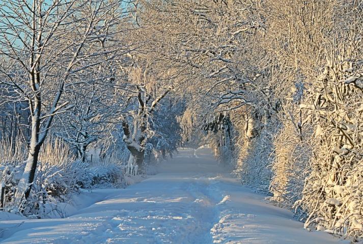 winter-1093798_960_720.jpg