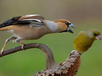uccelli_Lipu_foto_di_Maurizio_Giorgi-kcsH--1280x960@Produzione